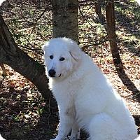 Adopt A Pet :: Yeti - Adopted! - Croydon, NH