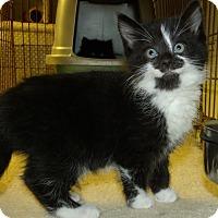 Adopt A Pet :: DIAMOND - Acme, PA