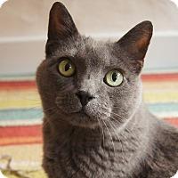 Adopt A Pet :: Minnie - Colorado Springs, CO