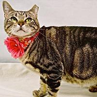 Adopt A Pet :: Abrams - Arlington/Ft Worth, TX