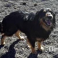 Adopt A Pet :: Dino - Yreka, CA