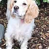 Adopt A Pet :: Freckles-Adoption Pending - Sacramento, CA