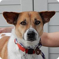 Adopt A Pet :: Charley - Long Beach, NY