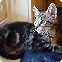Adopt A Pet :: Buffy - St. Louis, MO