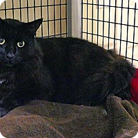 Adopt A Pet :: Ting - Victor, NY