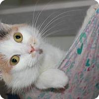 Domestic Mediumhair Cat for adoption in Erwin, Tennessee - Nova