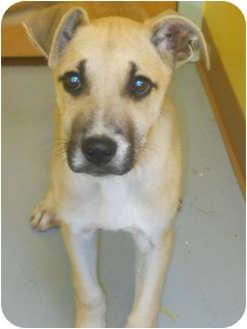 Shepherd (Unknown Type) Mix Dog for adoption in Rockingham, North Carolina - Cracker