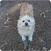 Adopt A Pet :: Abigail - Eden, NC