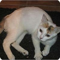 Adopt A Pet :: Peanut - pending - Warren, OH