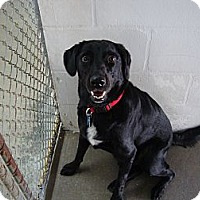 Adopt A Pet :: Boomer - Winter Haven, FL