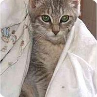 Adopt A Pet :: Star - Jenkintown, PA