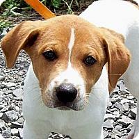 Adopt A Pet :: CUDDLES/Summer Spec Pricing - Glastonbury, CT