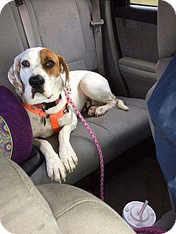 Boxer Mix Dog for adoption in Coeburn, Virginia - Sadie