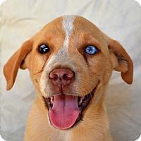 Adopt A Pet :: *Patsy - PENDING - Westport, CT