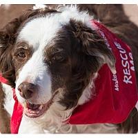 Adopt A Pet :: Miss Jilly - Tempe, AZ
