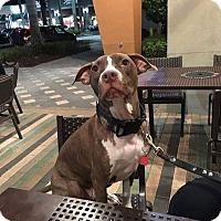 Adopt A Pet :: Hennessy - Davie, FL