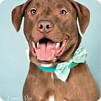 Adopt A Pet :: Danny - Mt. Clemens, MI
