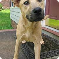Adopt A Pet :: Billy - Lawrenceville, GA