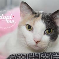 Adopt A Pet :: NeNe - Lindenwold, NJ