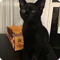 Adopt A Pet :: Dean Jr. - Fort Lauderdale, FL