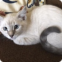 Adopt A Pet :: Blueberry - Fort Worth, TX