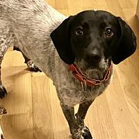 Adopt A Pet :: Chloe - Rockville, MD