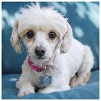 Adopt A Pet :: GERI - Glendale, CA