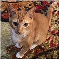 Adopt A Pet :: Ale171895  (Hurricane) - Atlanta, GA