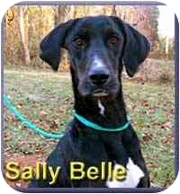 Greyhound/Hound (Unknown Type) Mix Dog for adoption in Aldie, Virginia - Sally Belle