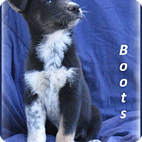 Adopt A Pet :: Boots - Marlborough, MA