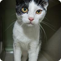 Adopt A Pet :: Lexi - New York, NY