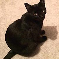 Adopt A Pet :: Susie - O'Fallon, MO