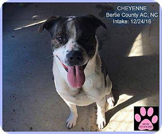 Mixed Breed (Large) Mix Dog for adoption in Powellsville, North Carolina - Cheyenne
