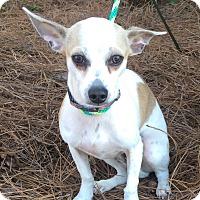 Adopt A Pet :: Coco Bear - Mount Pleasant, SC