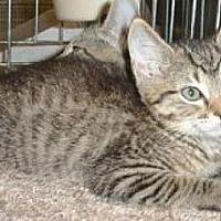 Adopt A Pet :: Hansel - Miami, FL