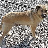 Adopt A Pet :: Daisy Lee - Joliet, IL