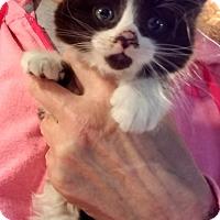 Adopt A Pet :: Miranda - Geneseo, IL