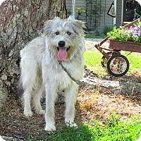 Adopt A Pet :: BUCK - Bedminster, NJ