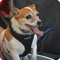 Adopt A Pet :: Deja - Louisville, KY