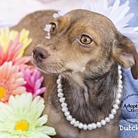Adopt A Pet :: DUTCHESS - Inland Empire, CA