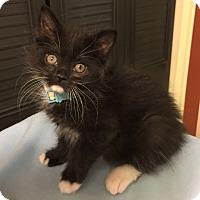 Adopt A Pet :: Ritter - Colorado Springs, CO