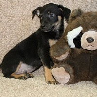 Adopt A Pet :: Taco - Washington, DC