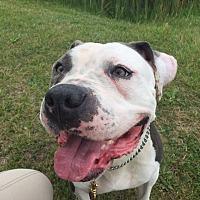 Adopt A Pet :: Mary - PENDING - Garden City, MI
