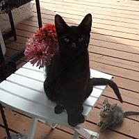 Adopt A Pet :: Mama *Courtesy Post* - Redding, CA