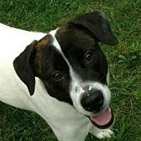 Adopt A Pet :: Bella - Woodstock, GA