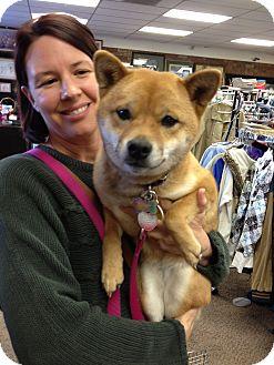 Shiba Inu Dog for adoption in Ogden, Utah - Shiba