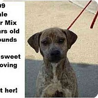 Adopt A Pet :: # 753-09 - ADOPTED! - Zanesville, OH