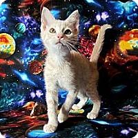 Adopt A Pet :: Tuffy McDuff - Orlando, FL