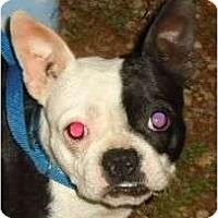 Adopt A Pet :: Sassy Frassy - Allentown, PA