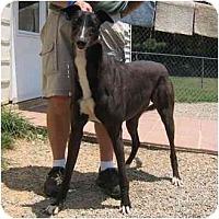 Adopt A Pet :: Shaky - Oak Ridge, NC